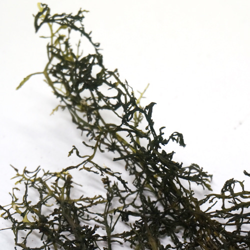서실 50g (Chondria crassicaulis Harvey) 국산