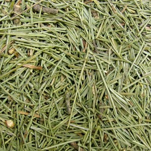 대왕송잎 50g (Pinus Palustris Leaf) 국산